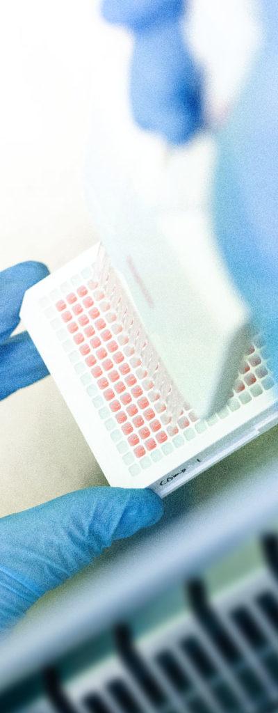 Biotech Company Netherlands Translational Research Center B.V. (NTRC)
