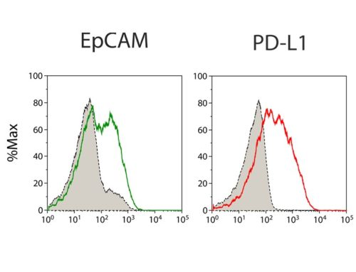 Expression of tumor cell markers and PD-L1 on primary patient-derived cells