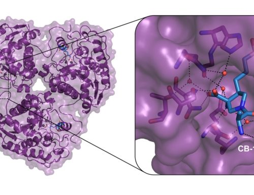 New Structural Insights into Arginase-1, a Target for Cancer Immunotherapy
