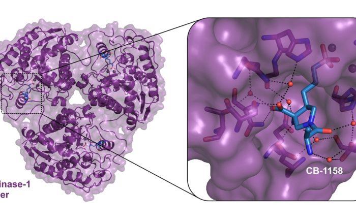 Arginase1_Cancer Immunotherapy_Crystal